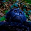 Algunos lugares donde existe vida salvaje más raras del mundo